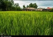 چرا برخی کشاورزان استان زنجان از الگوی کشت پیروی نمیکنند؟