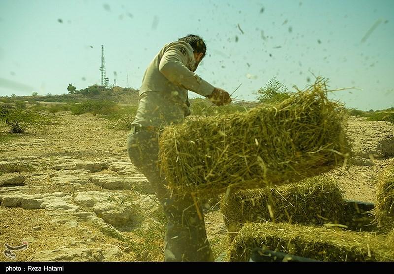 «معجزه آبخیزداری» انجام طرح های آبخیزداری مهاجرت به شهرها را در استان زنجان کاهش داد