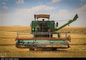 گزارش|دخل و خرج کشاورزان با هم نمیخواند؛ گندمکاران از پرداخت دیر هنگام مطالبات ناراضیاند