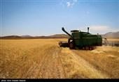 گزارش|استفاده بیرویه کشاورزان از کودهای شیمیایی/ مسئولان جهاد کشاورزی همچنان در خواب زمستانی