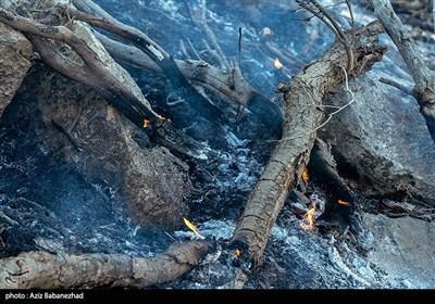 کهگیلویه و بویراحمد  حریق جنگلهای «نیر» پس از ۶ روز مهار شد+ تصاویر
