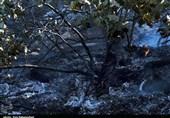 آتش سوزی جنگلهای روستای «قالبی» خرمآباد مهار شد
