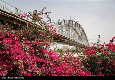پل سفید اهواز یا پل معلق یا پل هلالی نام یکی از پلهای شهر اهواز است که یکی از نمادهای این شهر نیز محسوب میشود