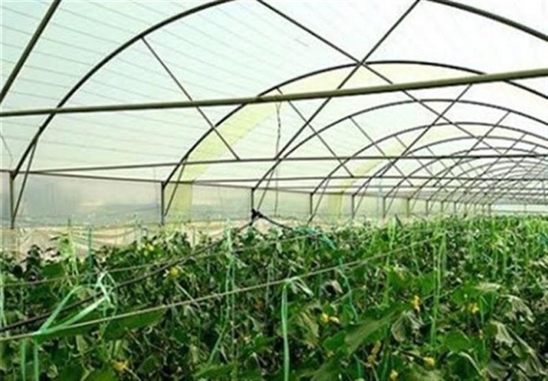 کرونا 23 هزار میلیارد ریال به گلخانهها خسارت زد/ هیچ کارگری اخراج نشد