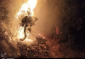روایت تصویری نگرانکننده از مرگ درختان بلوط در دمچنار