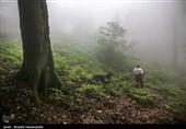احراز هویت جسد کشف شده در ارتفاعات جهاننما/ جسد فردا به خانواده رضانژاد تحویل میشود