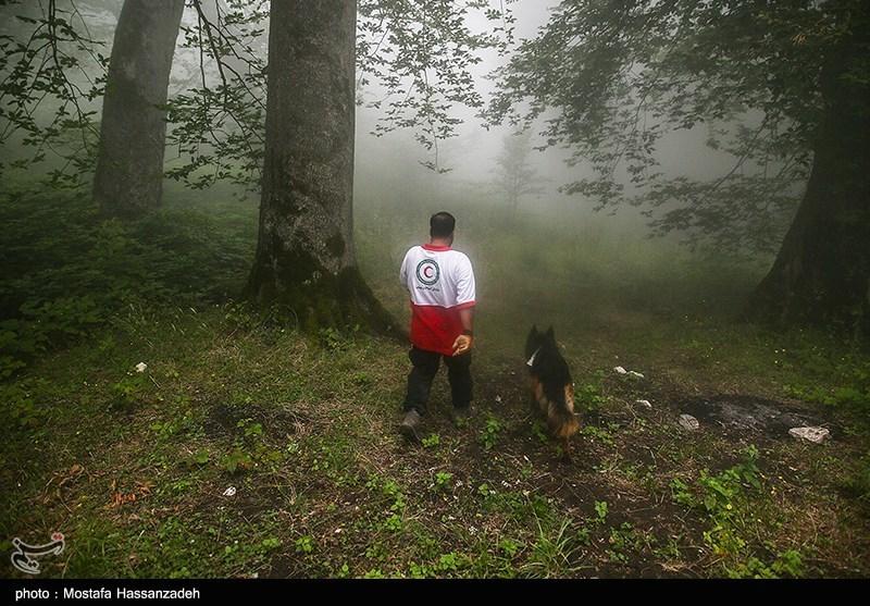 رئیس پلیس آگاهی گلستان: سرنخی از کوهنور گمشده در جنگلهای کردکوی پیدا نشد/فرضیههای جنایی در دست بررسی است