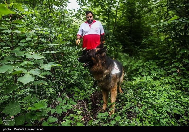 گلستان|جوان 37 ساله در جنگل کردکوی مفقود شد/ تجسسها ادامه دارد