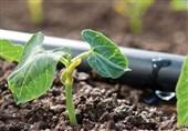 ٢١ درصد از اراضی کشاورزی سیستانوبلوچستان به سیستم نوین آبیاری مجهز شد