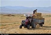 شبکه تعاونیهای روستایی 2 میلیون تن گندم خریداری کردند