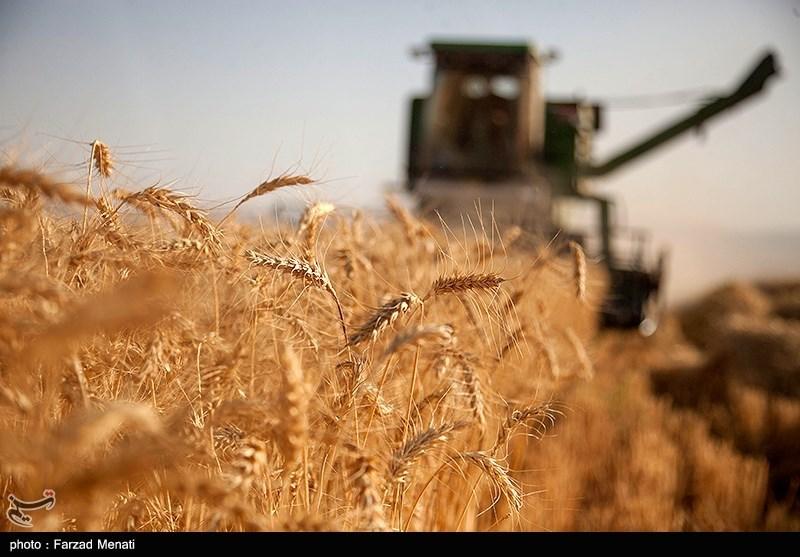 تشکیل شورای 9 نفره از دولت و کشاورز برای تعیین قیمت خرید تضمینی