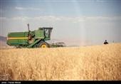 کاهش بارندگی هم نتوانست مقابل جهش تولید خوشههای طلایی گندم قرار بگیرد