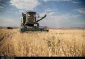کشت پائیزه گندم در خراسان شمالی؛ کشاورزان وام 20 میلیون تومانی میگیرند