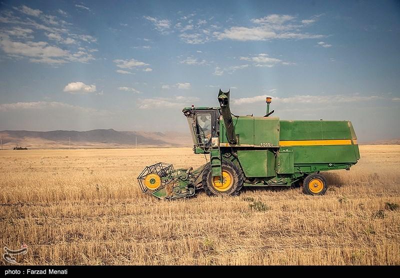 محصول 22 هزار هکتار مزارع گندم استان بوشهر بر اثر خشکسالی از بین رفت