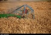 ضرر 1000 تومانی کشاورزان در تولید هرکیلو گندم/چرا دولت در تشکیل شورای قیمتگذاری وقتکُشی میکند؟