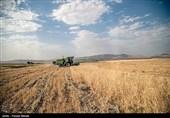 18 هزار تن گندم از کشاورزان خراسان جنوبی خریداری شد