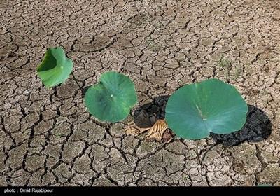 خشک شدن تالاب سوستان لاهیجان