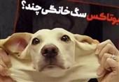 عمل زیبایی حیوانات در ایران تکذیب شد