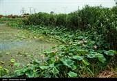 تصویب 640میلیارد تومان برای احیای دریاچه ارومیه/ میزان حقابه تمامی تالابهای کشور مشخص میشود