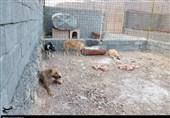 صفر تا صد ماجرای کمپ سگهای ولگرد در شهرستان مبارکه و پیگیری برای رفع مشکلات کمپ