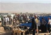 """بازار داغ فروش آنلاین گوسفند در خراسان جنوبی؛ پای """"دلالان دام"""" هم به فضای مجازی باز شد"""