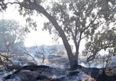 شناسایی عاملان آتشسوزی جنگلهای کوهدشت؛ 5 نفر دستگیر شدند