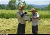 چگونه از بورس کالا برنج بخریم؟