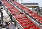 گزارش|کشاورزی اردبیل چشمانتظار صنایع تبدیلی / هدررفت محصولات تولیدی کام باغداران را تلخ کرد