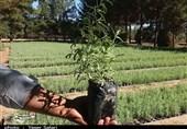"""طرح """"کاداستر"""" در 511 هزار هکتار از جنگلهای استان مازندران اجرا میشود"""