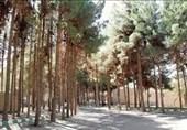 گلایههای شهروندان در شهر کاجها /رسیدگی به فضای سبز بیرجند افزایش یابد