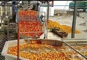 استفاده از صنایع تبدیلی کشاورزان را به حقشان میرساند