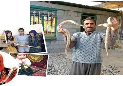 زندگی عجیب شهروند کرمانشاهی با خزندگان مرگبار