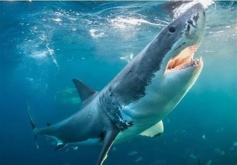 Scientists Baffled After Finding Sharks Living inside Active Volcano