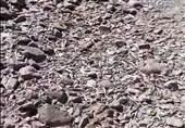 مرگ ماهیان کوهدشت در کمآبی؛ برداشت آب از مادیانرود