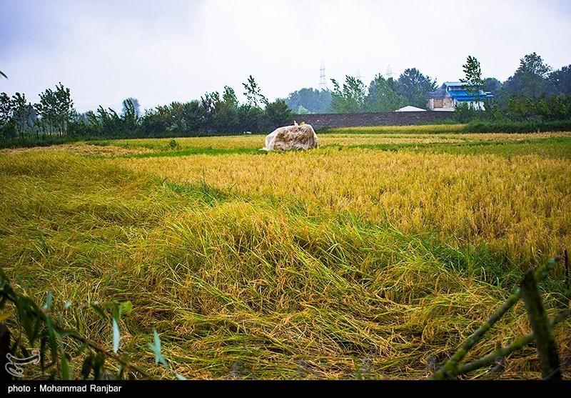 هشدارهای سازمان هواشناسی به کشاورزان تا 11 آبانماه