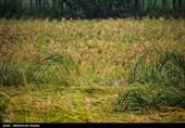 تاسیس شورای قیمت گذاری و اتخاذ سیاست حمایتی محصولات اساسی کشاورزی