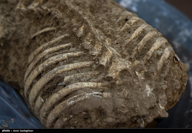 Remains Of Humans Animals Found In Persepolis Ruins Photos Society Culture News Tasnim News Agency