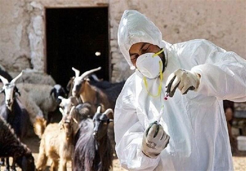 موفقیت دانشمندان ایرانی در ساخت واکسن دامی/ جلوگیری از خروج 5 میلیون دلار ارز از کشور