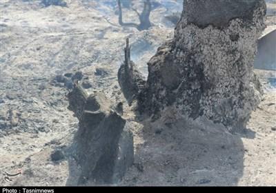 کهگیلویه و بویراحمد  آتش همچنان در « جنگلهای لنده» زبانه میکشد