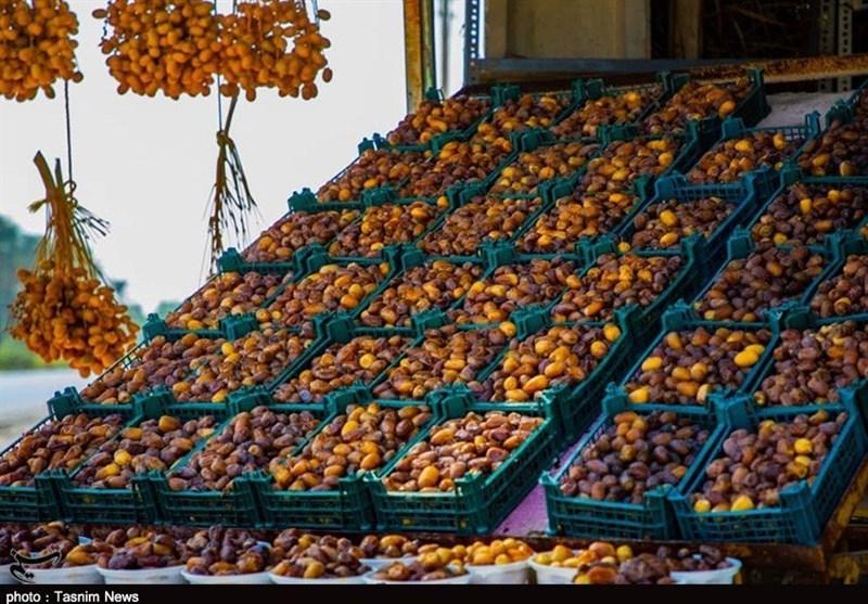 گزارش| نخلداران استان بوشهر نگران از افت قیمت/ نرخ خرما در نخلستانها 10 درصد کاهش یافت