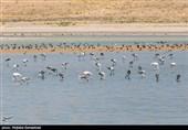 زیستگاههای آبی و تالابی استان اردبیل پایش میشود
