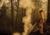 افزایش تلفات آتش سوزی در مناطق غربی آمریکا