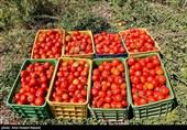 گلایه مردم از گرانی گوجه فرنگی در بیرجند /املت هم به غذاهای مجلل پیوست