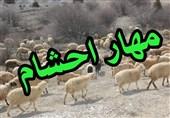جلوگیری از قاچاق 2424 رأس دام به خارج از کشور