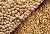 معاون وزیر جهاد کشاورزی: یک میلیون تن کنجاله سویا برای تولید مرغ کم داریم/وزارت صمت باید پاسخگو باشد
