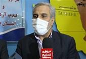 معاون وزیر صمت در بوشهر: خرید گندم تضمینی از کشاورزان 7 درصد افزایش یافت + فیلم