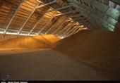 خرید تضمینی 1 میلیون و 100 هزار تن گندم کشاورزان