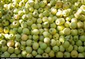 صادرات سیب از آذربایجانغربی هموار شد