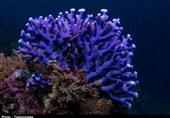 گزارش| مرگ تدریجی مرجانهای دریایی خلیج فارس؛ اختلال در اکوسیستم دریا با ورود آلایندههای صنعتی