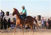جولان دلالان برای واردات اسبهای عرب درجه 2 و 3 به کشور/ هیچ نیازی به واردات اسب نداریم